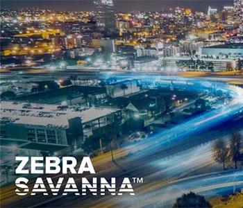 Zebra - SAVANNA