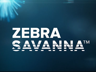 Zebra - SAVANNA